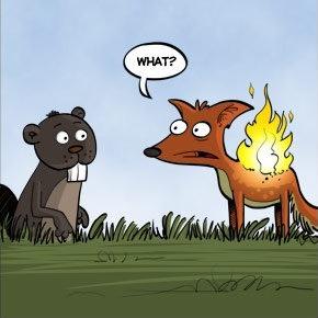 FireFox-0