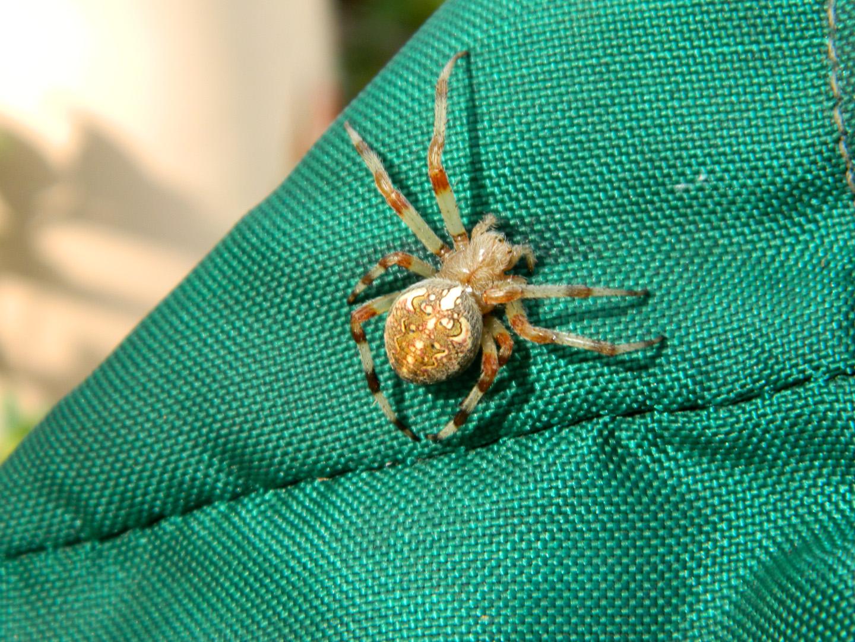 Чудовище-паук