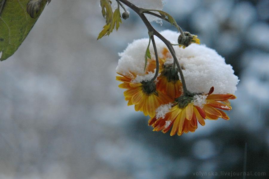 november_snow