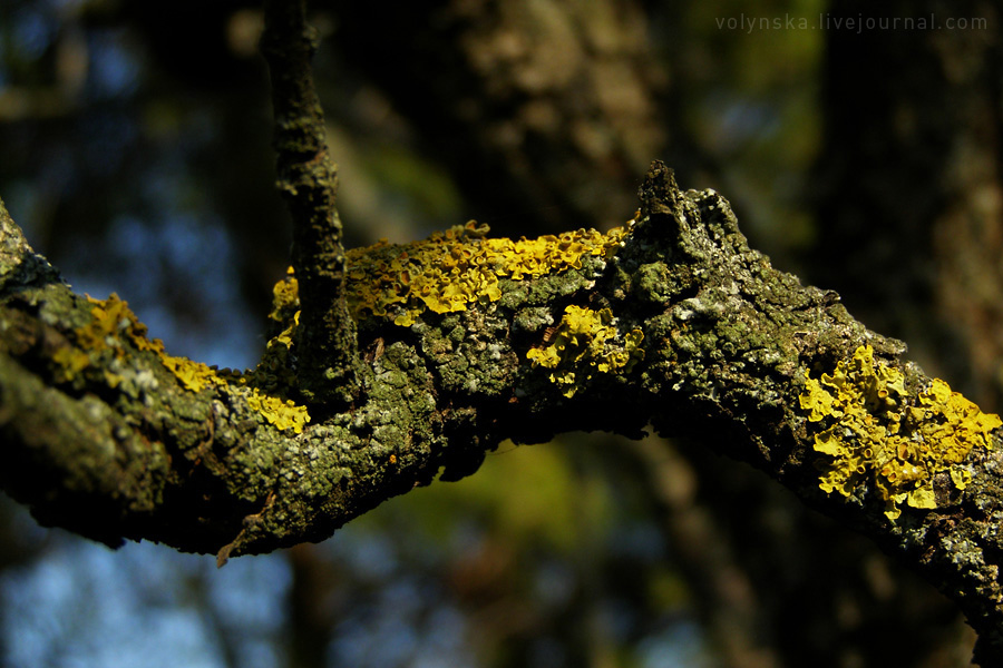 Старое дерево. Апрель 2015.