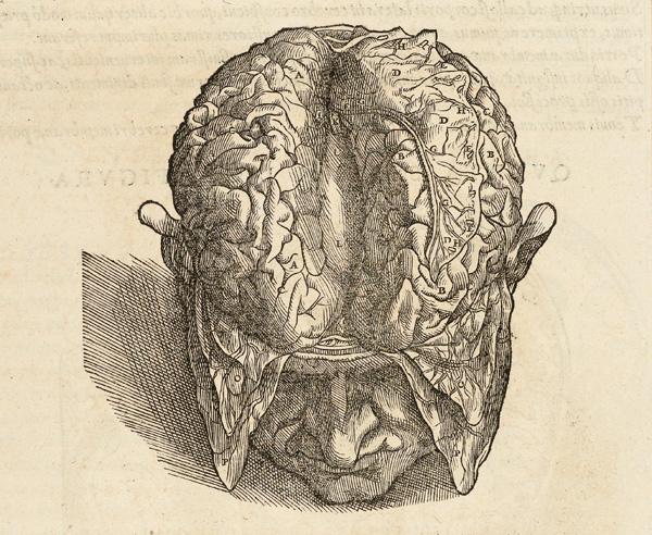 Рисунок из анатомии «Строение человеческого тела, в семи книгах» Андреаса Везалия. 1543. Иллюстратор ван Калькар.