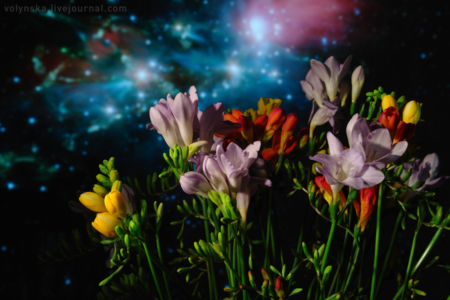 cosmic_freesia_.jpg