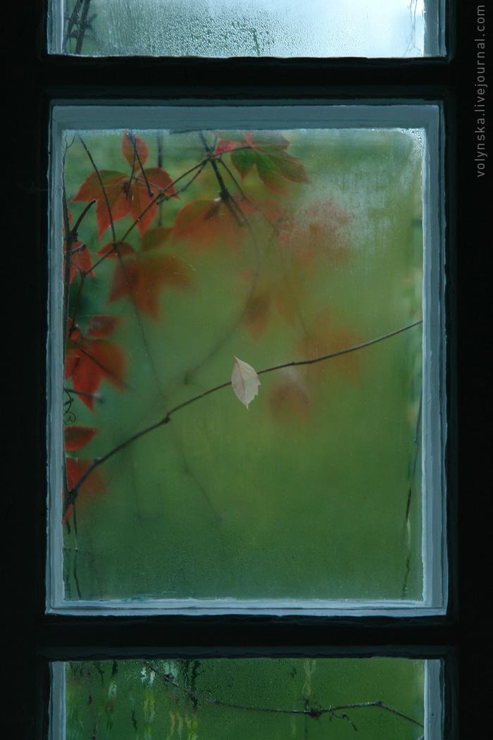 Осень в окне.
