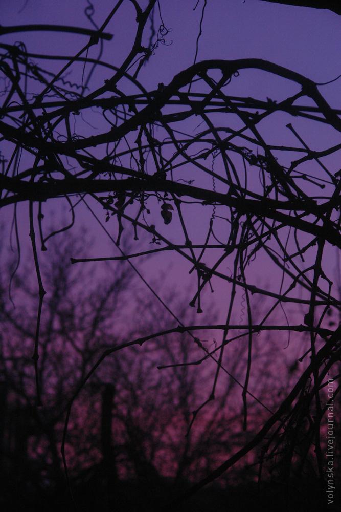 violet_sunset.jpg