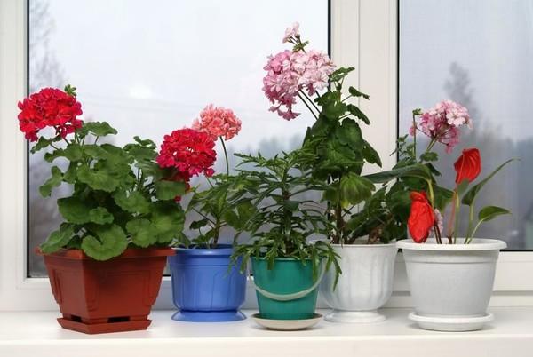 сообщалось, благоприятные цветы для дома с фотографиями добраться долины