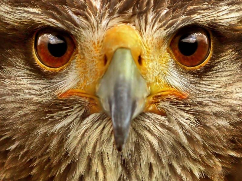 Глаза орла