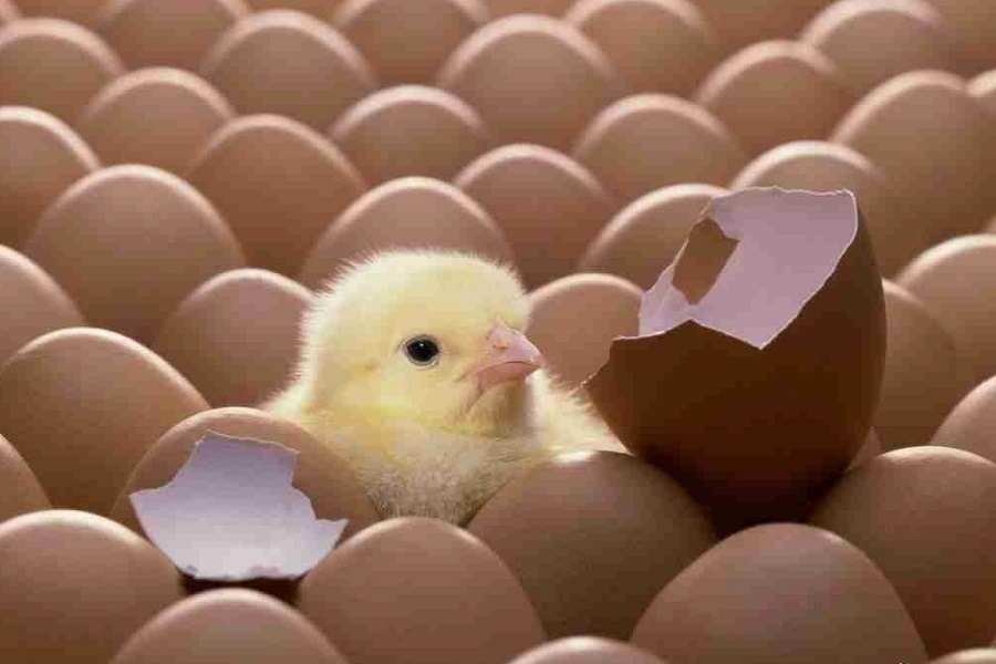 Выбираем яйца правильно