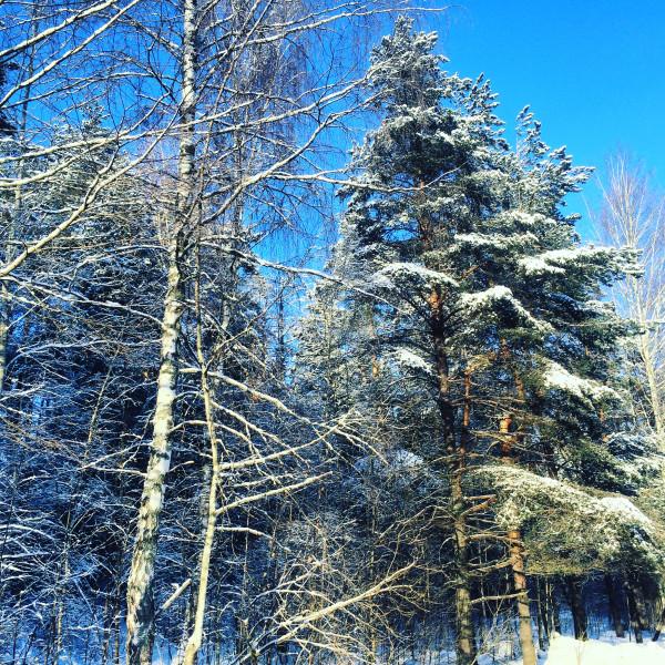 Мышкин - зимняя дорога