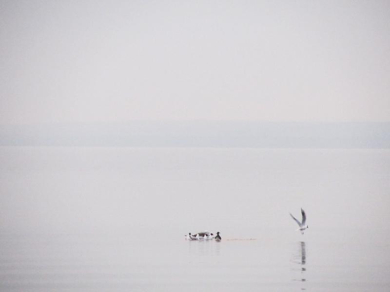 Плещеево озеро. Вечер. Чайки