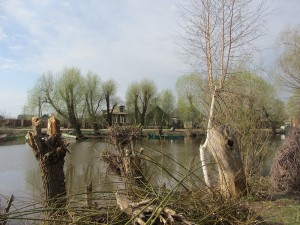 Правый берег. Деревья