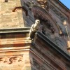 Церковь св. Якоба. Горгулья.jpg