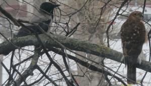 Две птицы.jpg