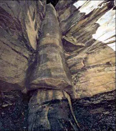 Окаменевшее дерево в шт. Теннеси