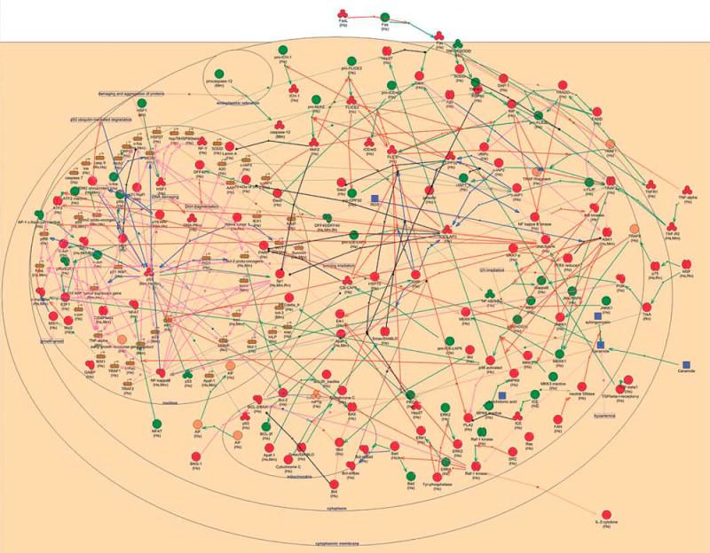 Генная сеть, контролирующая апоптоз