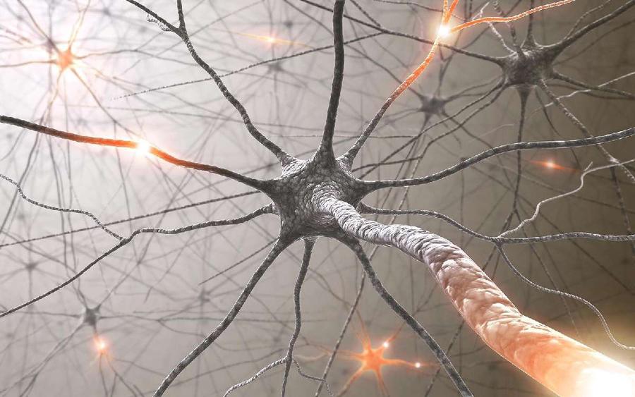 Нейронная сеть мозга