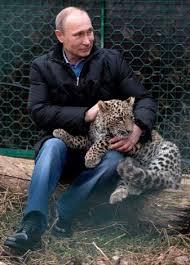 B B D o leopard