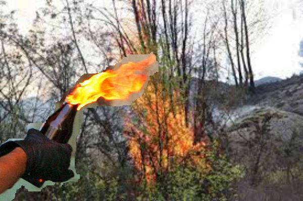 brinnande buske xx
