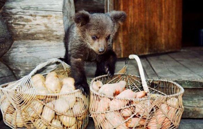 http://ic.pics.livejournal.com/vova_91/36948996/4048869/4048869_original.jpg