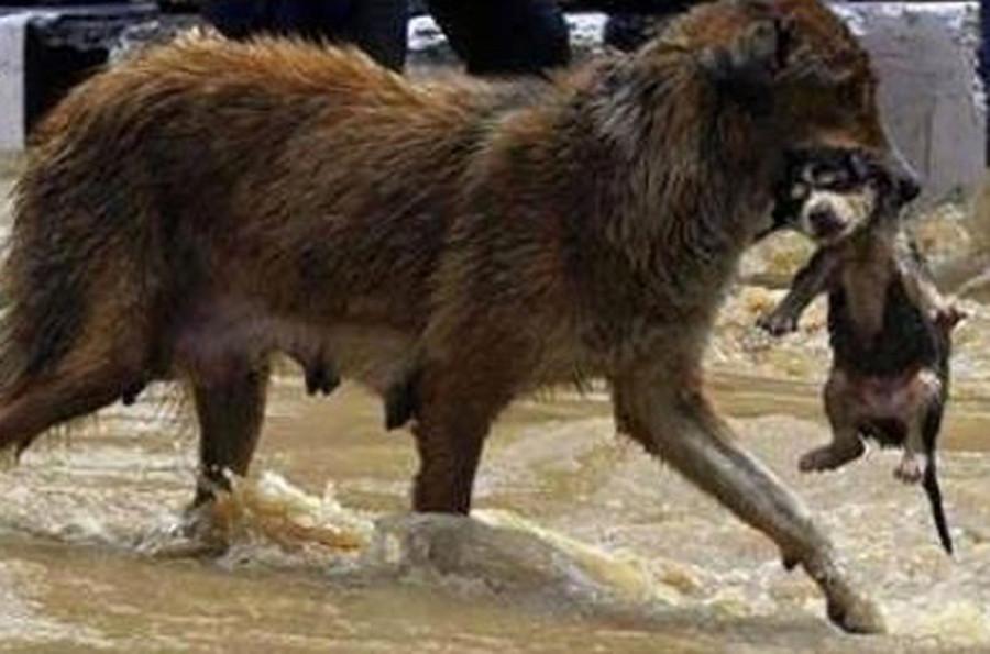 Tbilisi-floods8
