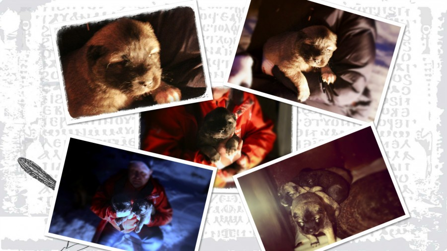 collage_photocat1111
