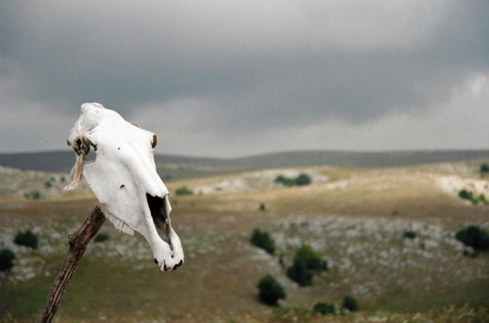 Лошадь сдохла