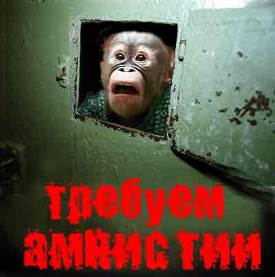 Амнистия11
