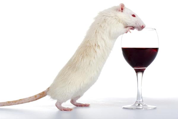 Вино121