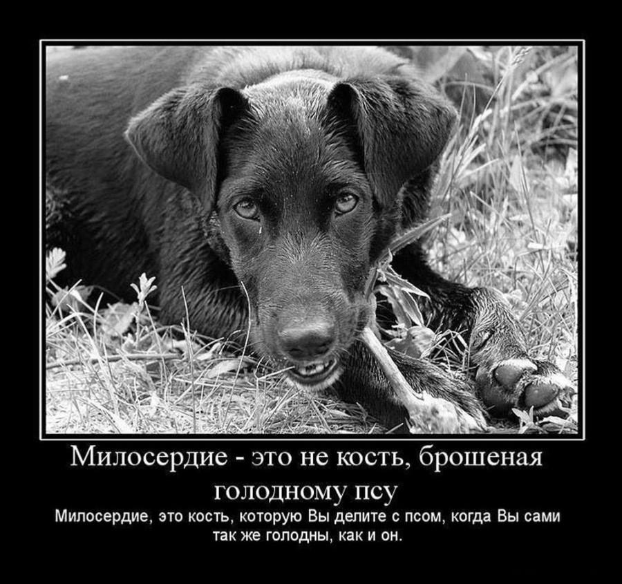 Милосердие1