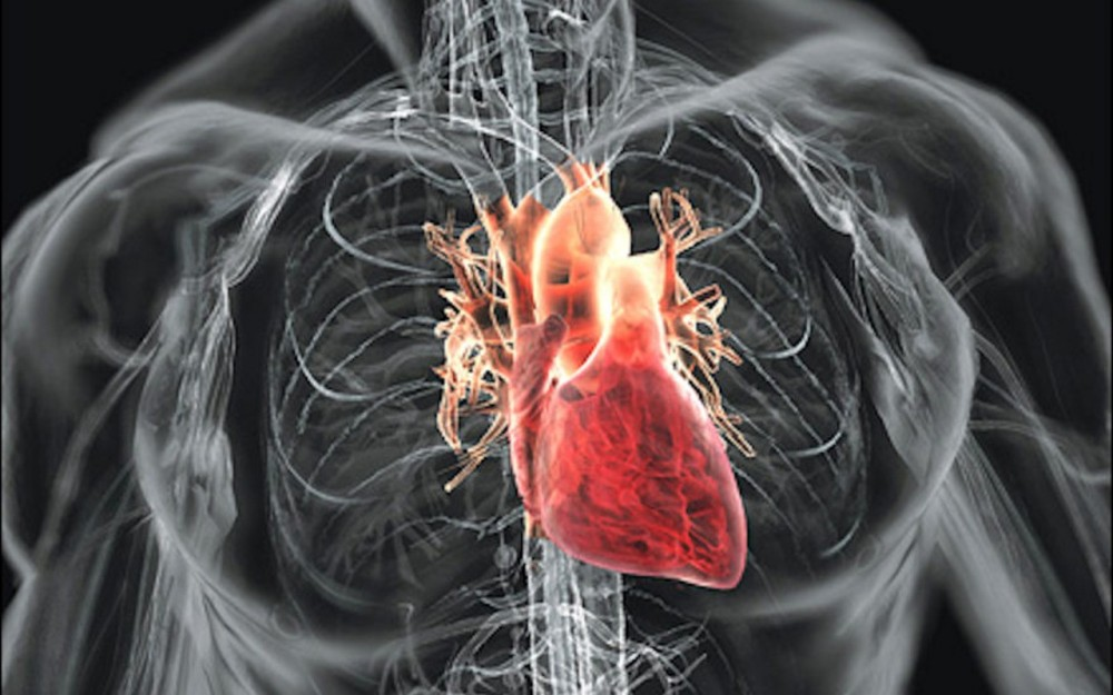 Сердце11
