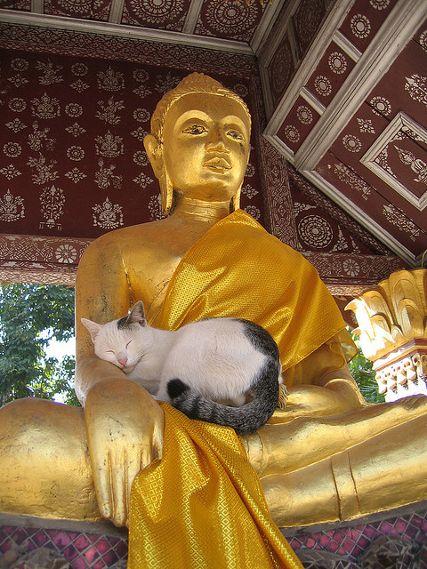 2019 09 16 кот и будда