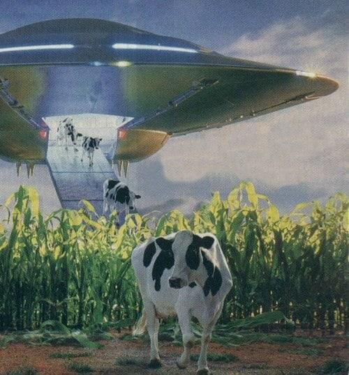 2020 10 21 нло и коровы