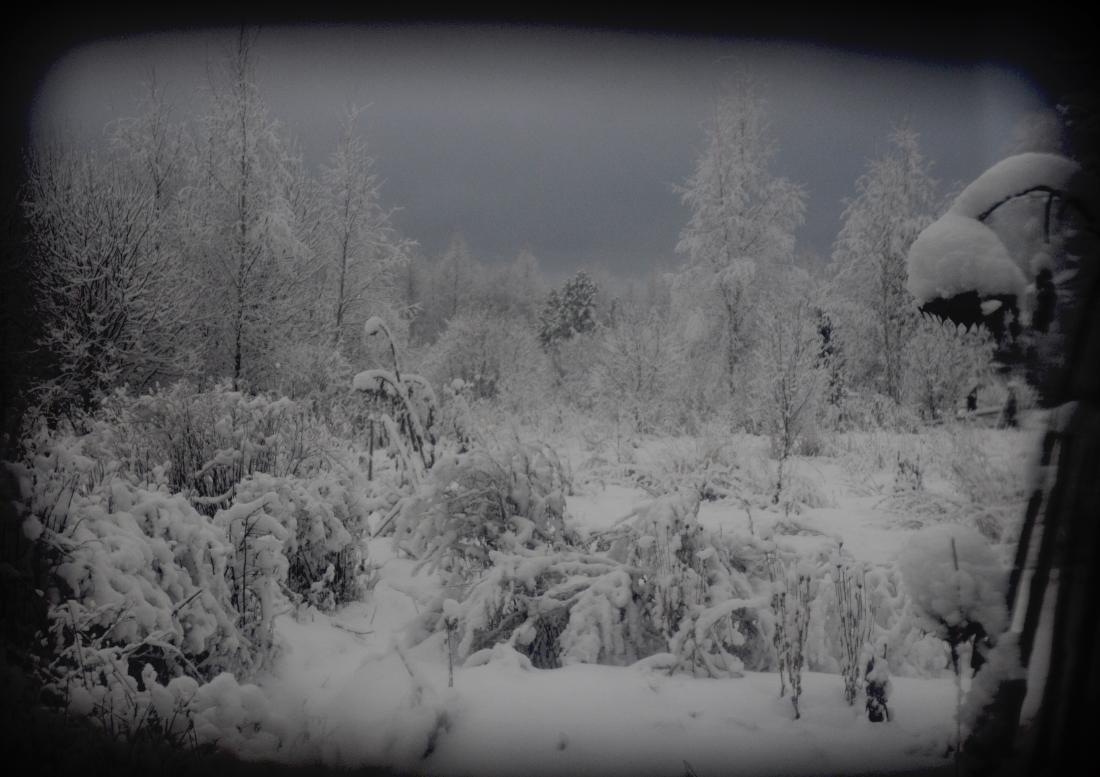 zima_DSC3926-4.jpg