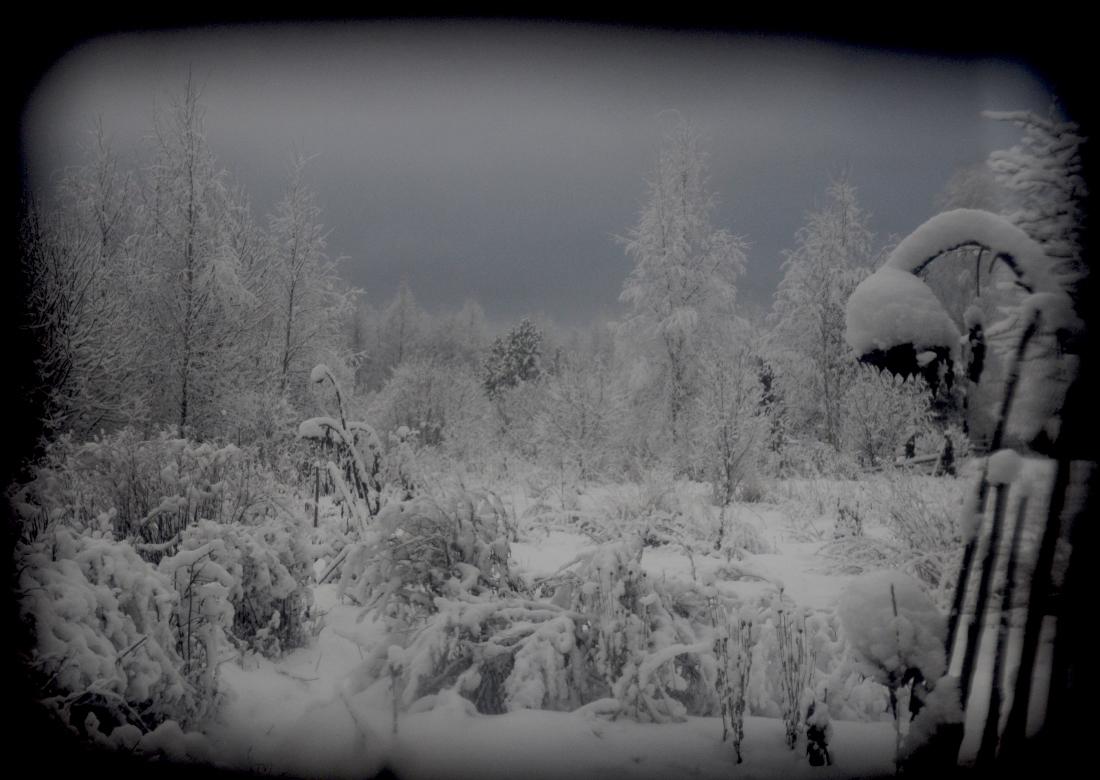 zima_DSC3927-7.jpg