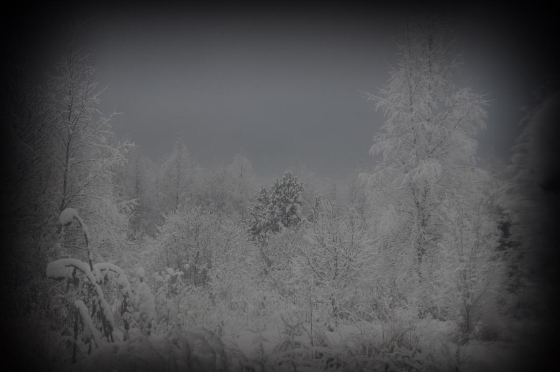 zima_DSC3931.jpg