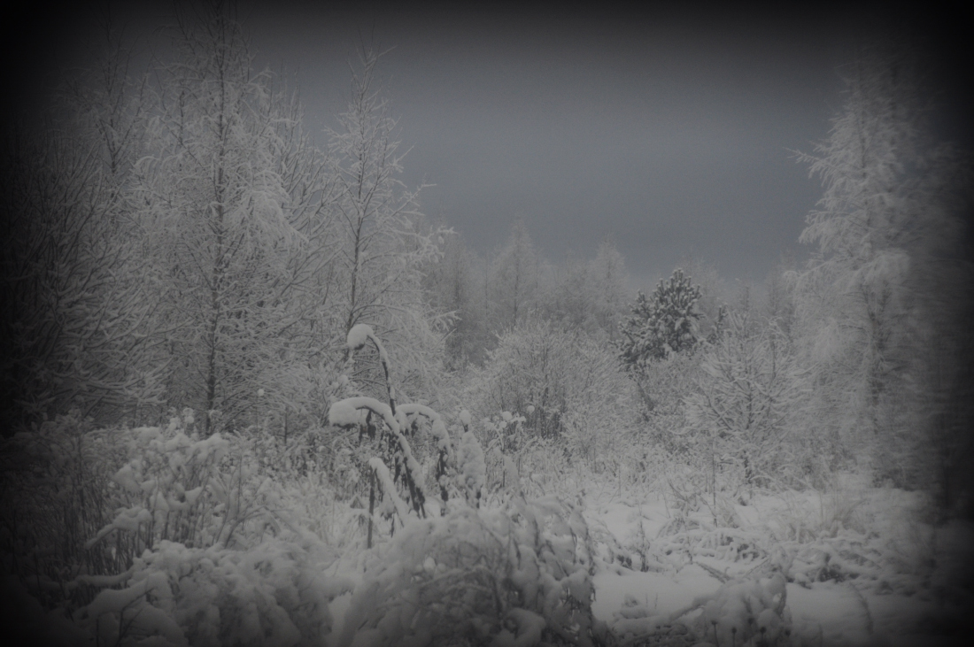 zima_DSC3932.jpg