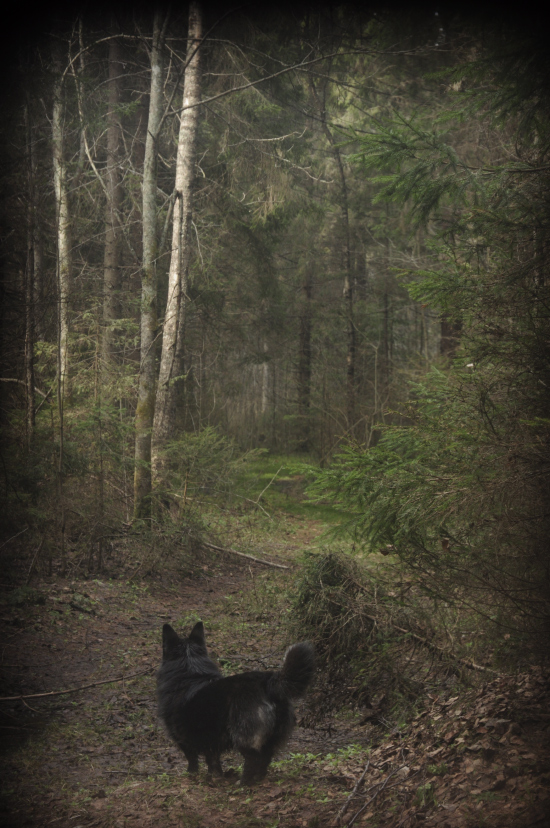 rita_woods-_DSC7884.jpg