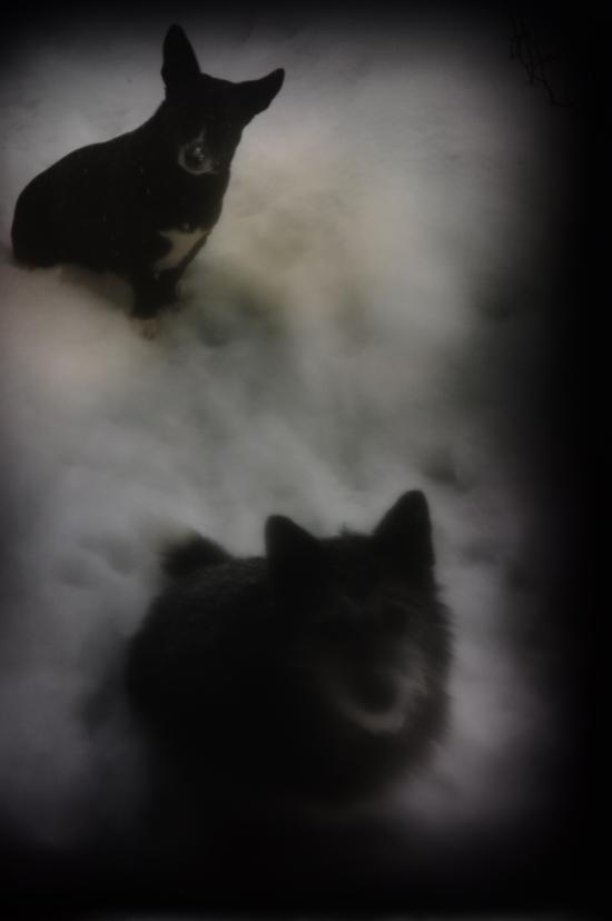 dogs_DSC5543.jpg