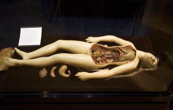 014_anatom