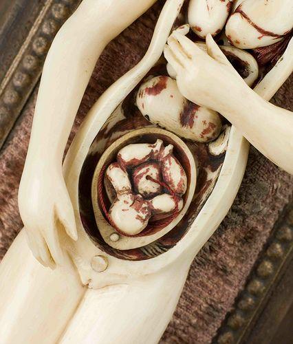 017_anatom