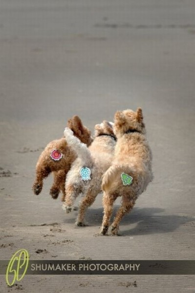dogs_2_05