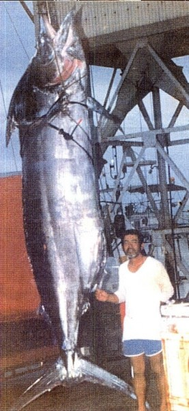 giganty008