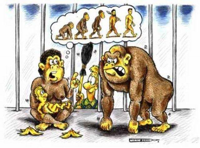 evoluciya013