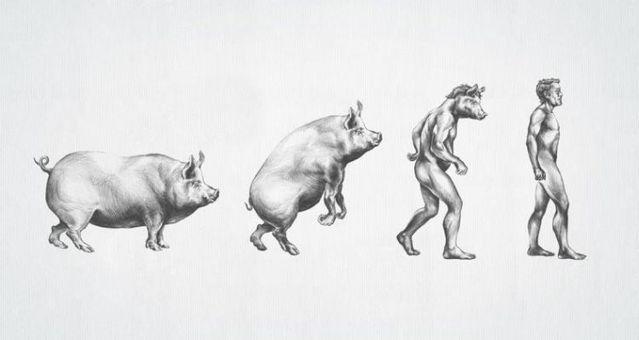 evoluciya019