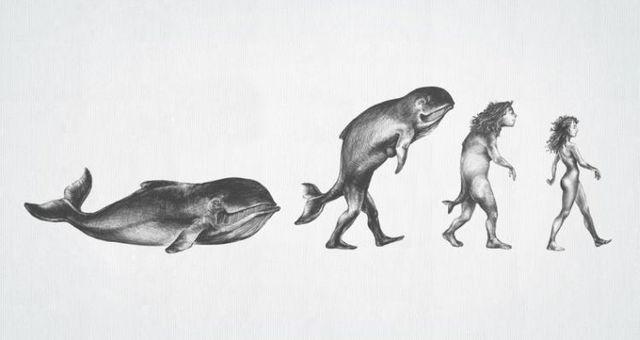 evoluciya020