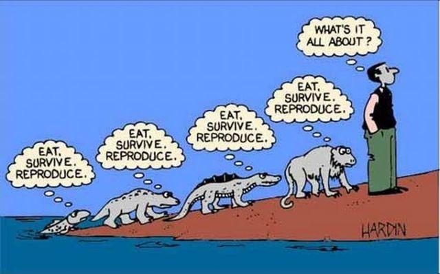 evoluciya031