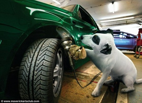 funy_dogs_mechanics_004
