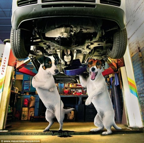 funy_dogs_mechanics_006