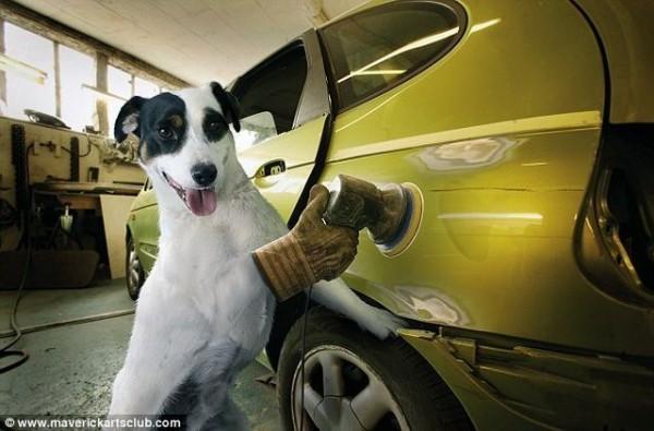 funy_dogs_mechanics_007