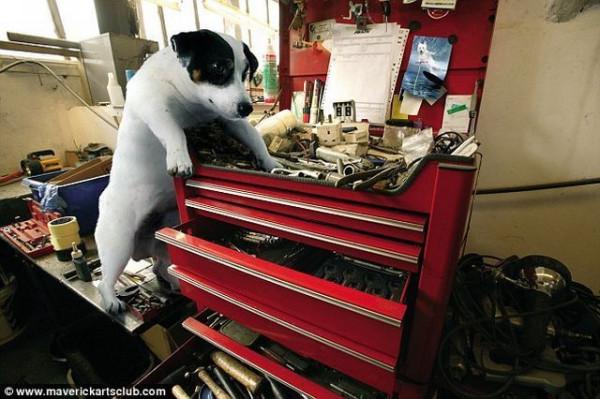 funy_dogs_mechanics_008