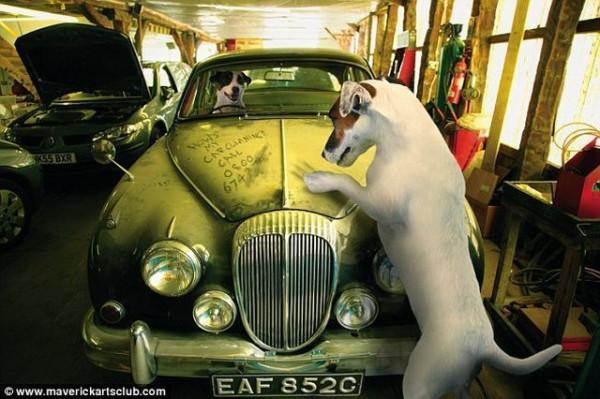 funy_dogs_mechanics_010